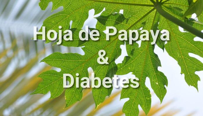 la hoja de olivo es buena para la diabetes
