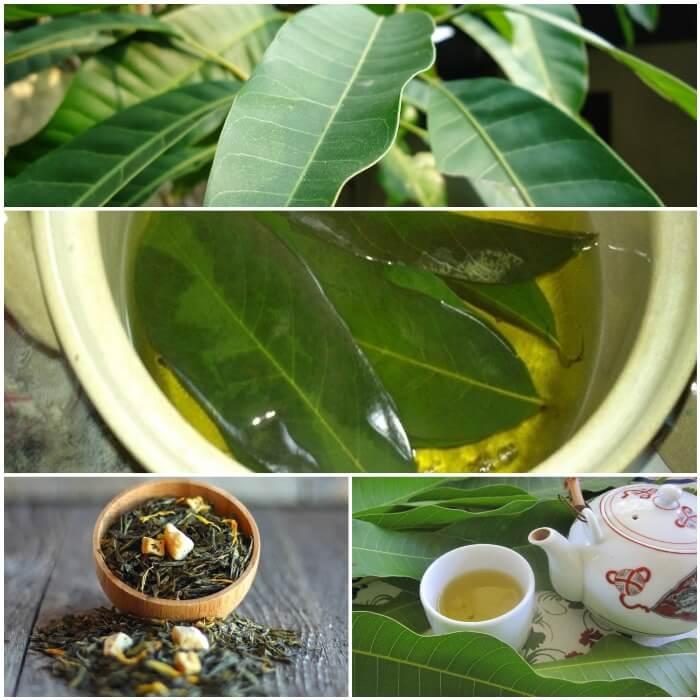 Hervir hojas de mango para la diabetes