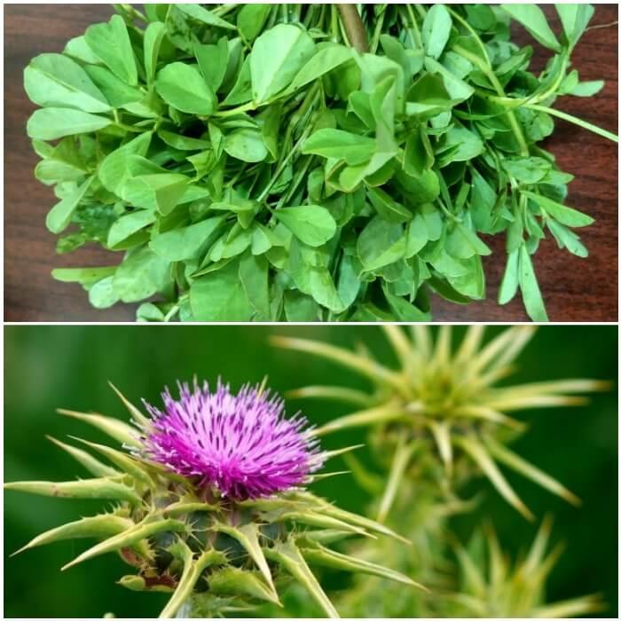 Remedios herbales para la diabetes