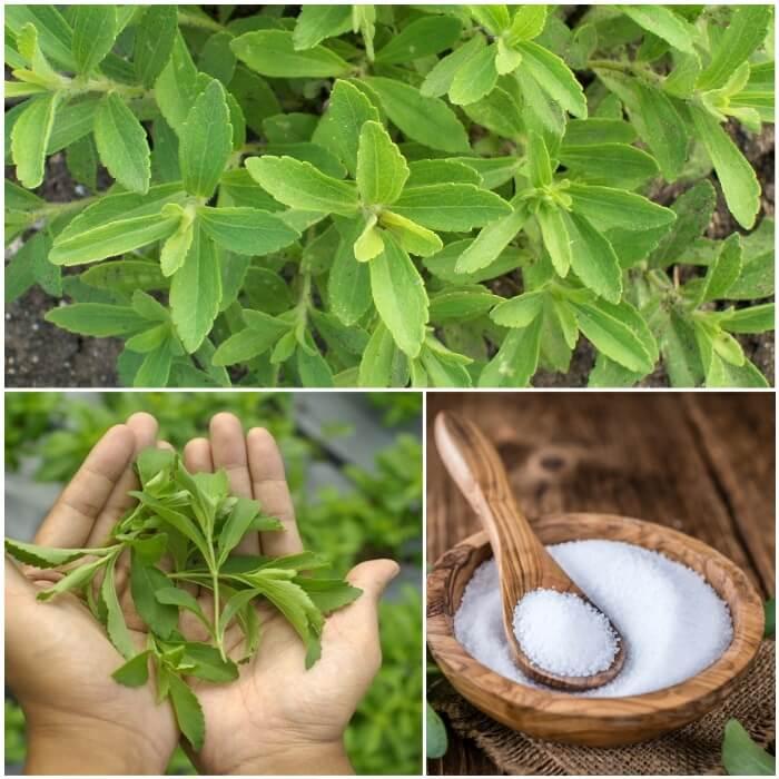 Edulcorante stevia para diabéticos